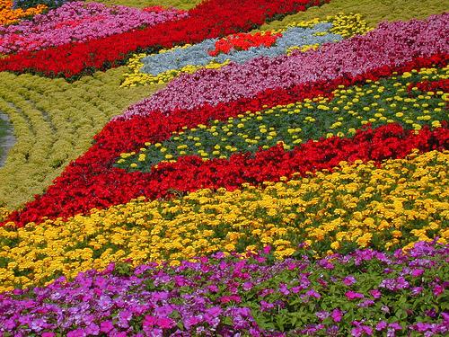 Как спланировать цветник в саду