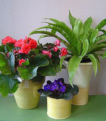 http://www.vira.ru/storage/enc/design/flowers-flowers1.jpg